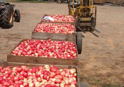 Ausbeutung von Backpackern bei der Farmarbeit