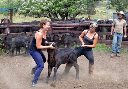 Reit- & Ranch-Vorbereitungskurs