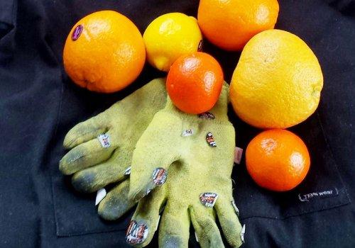 Arbeiten auf einer Orangenplantage