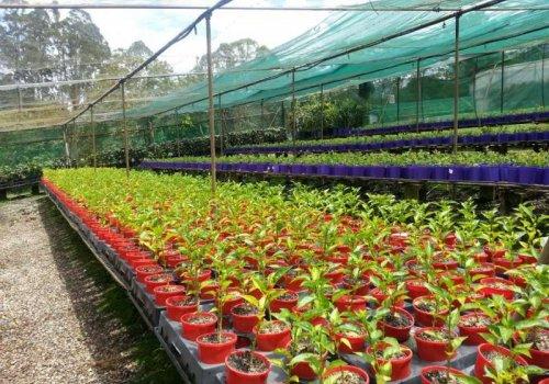 Arbeiten in einer Gärtnerei