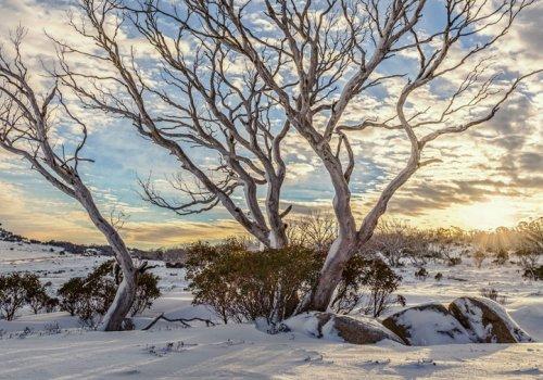 Jobsuche in den Snowy Mountains / NSW & Victoria
