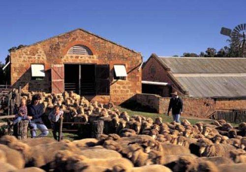 Wwoofing - Leben & Arbeiten auf einer Farm